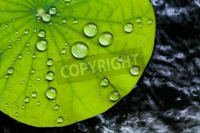 Wall mural Water droplets on Lotus leaf