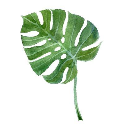 watercolor monstera leaf
