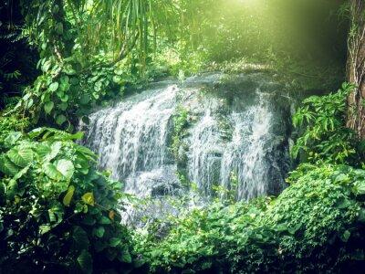 Wall mural waterfall in jungles of Seychelles, Mahe island