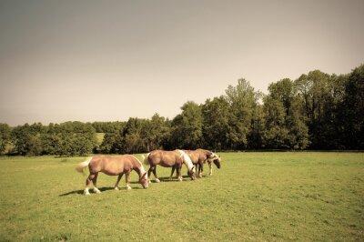 Well-groomed meadow in Germany