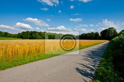 Wall mural Wheat Fields