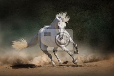 White andalusian horse in desert dust against dark background