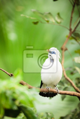 White exotic bird on a branch