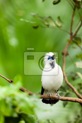 White exotic bird on a branch singing