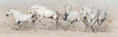 White horse herd run in desert dust. Light panorama for web
