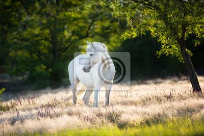 White horse in white stipa grass at sunlight