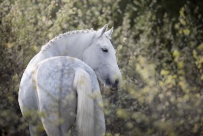White horse portrait on spring blossom landscape