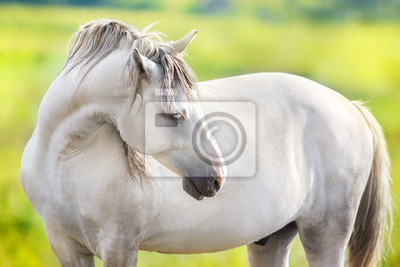 White horse portrait with green meadow and trees behind