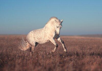Wall mural White horse run