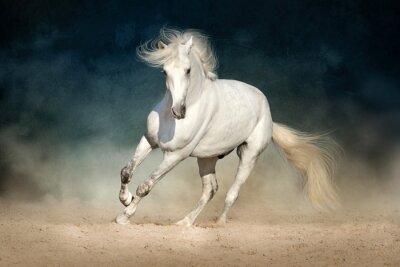 Wall mural White horse run forward in dust on dark background