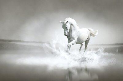Wall mural White horse running through water