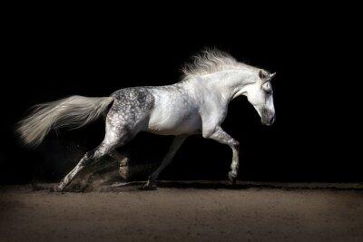 White horse with long mane in desert dust trotting