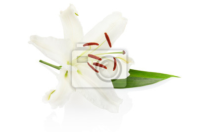 Wall mural White lily flower with clipping path