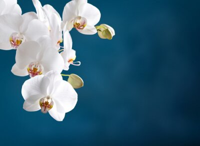 Wall mural White orchid