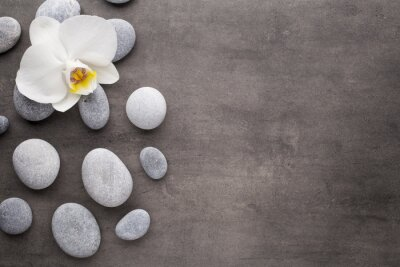 Wall mural White orchid and spa stones on the grey background.