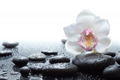 Wall mural white orchid and wet black stones