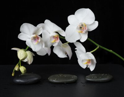 Wall mural White Orchid on a black background