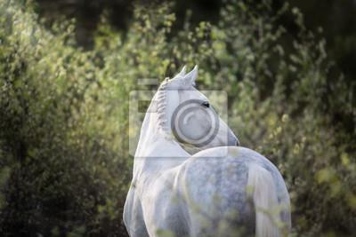 White orlov trotter portrait in forest