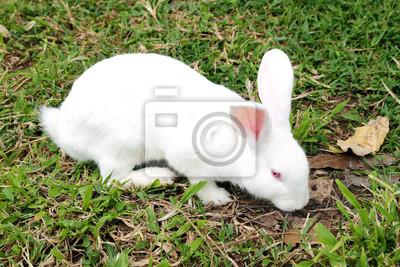 Wall mural White rabbit in a green grass