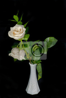 Wall mural White Rose and Reflection