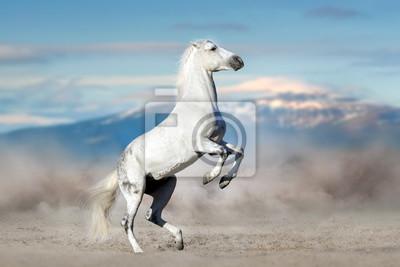 White stallion rearing up in desert dust against mountain landscape