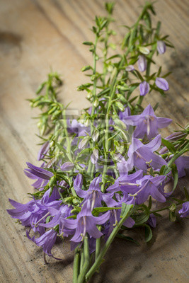 wild bellflower Campanula trachelium on an old wooden table background