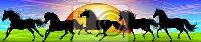 Wild Horse Horse - Banner- Cheval Sauvage