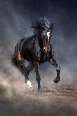 Wild horse run in dark desert dust