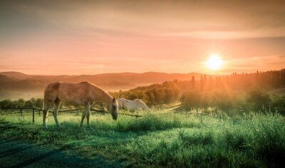 Wall mural Wild horses and tuscan sunrise