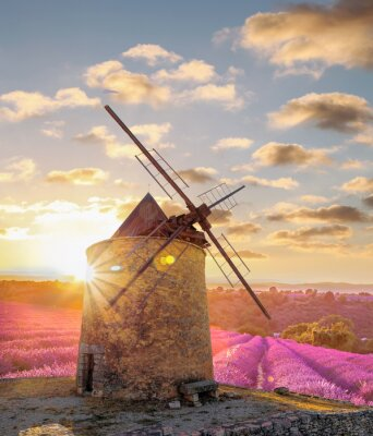 Wall mural Windmill with levander field against colorful sunset in Provence, France