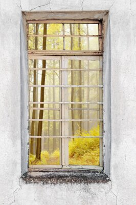 Wall mural Window of old cement house with forest view