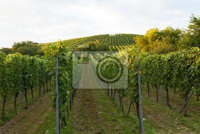 Wine fields in stuttgart germany