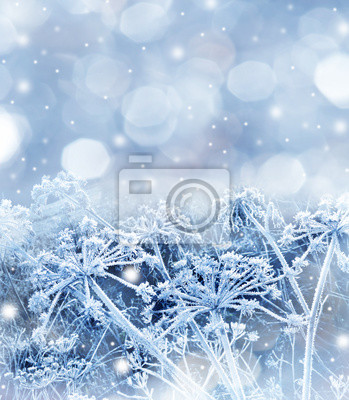 winter background with frozen plants