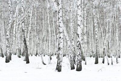 Wall mural winter forest