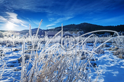 winter landscape with frozen grass