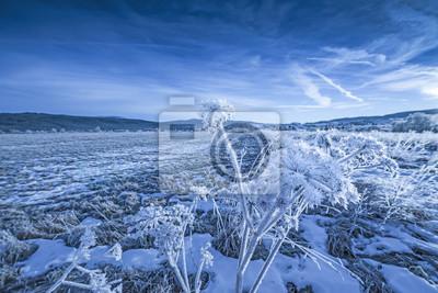 winter landscape with frozen plants