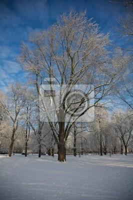 winter park 7