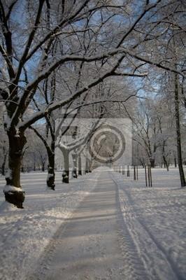 winter park 8