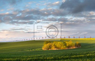 Wiosenne pole po ulewie