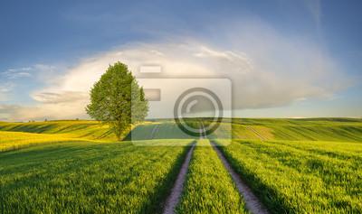 Wiosenne ,zielone pole młodego zboża