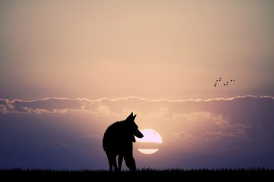 Wall mural wolf at sunset