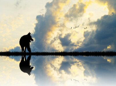 Wall mural wolf on river at sunset