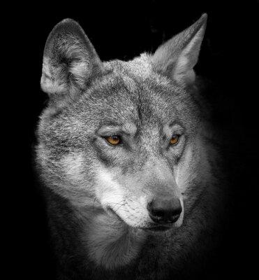 Wall mural wolf portrait