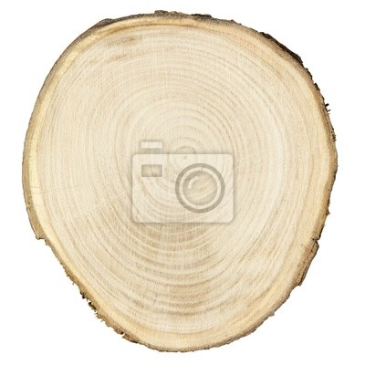 Wall mural wood cross section with clipping path