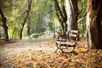 Wall Mural Wooden Bench In Autumn Park Vintage Photo