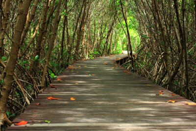 Wall mural wooden bridge in forest