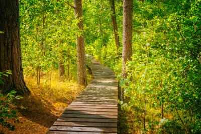 Wall mural Wooden pathway in the forest