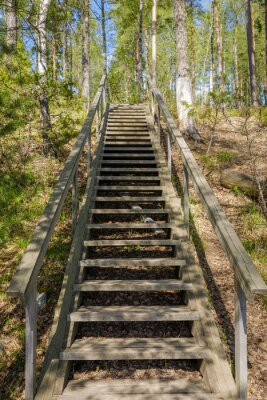 Wooden stairs in forest at summer day in Finland