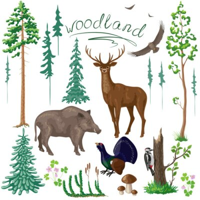 Wall mural Woodland Plants and Animals Set
