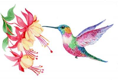 Wall mural акварель,маленькая птичка колибри ,иллюстрация
